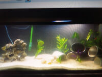 ALMOST NEW 50 GALLON FISH TANK WITH ALL ACCESSORIES