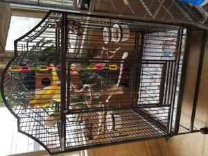 Male and female ringneck parrot and cage for sale.