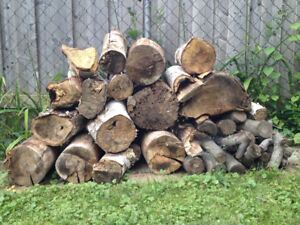Dry White Birch Fire Wood Logs for sale