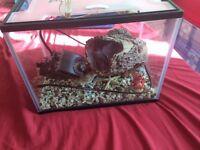 25l fish tank, full setup