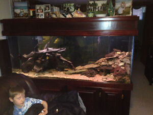250 gallon fish tank stand canopy and everything I have