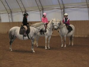 Riding lessons in Guelph