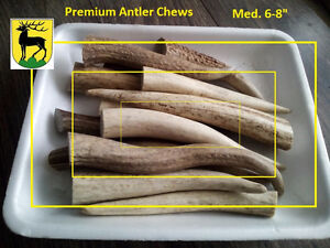 A grade 2017 fresh shed antler chews