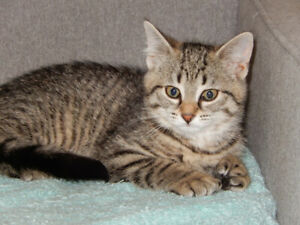 available for adoption Pawline