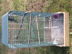 2 cockatiels with cage for sale
