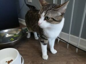 One year old male cat and accessories for $50