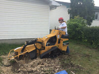 Stump Removal and Tree Felling Service