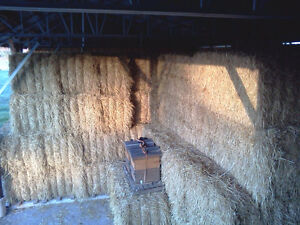 Wheat straw for sale Cambridge Kitchener Area image 5