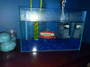 betta fish and 2ltr tank with tank filter + plant