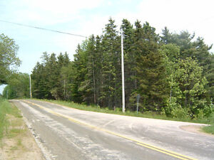 Beautiful Wood Lot with Plenty of Road Frontage