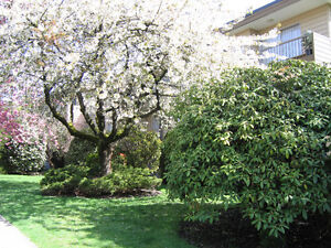 Large One Bedroom near Marpole Loop, For April 1st, 2017