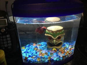 Beta fish tank with filter and light, plus extras.