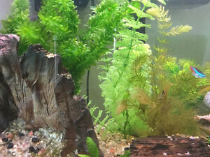 Looking for shrimp,java moss etc...