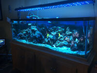 125 gallon salt water aquarium