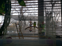 Selling budgies and the bird cage
