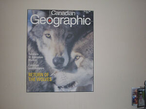 Dry mount Wolf picture