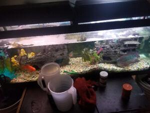 Aquarium 75 gallons full full load!!!