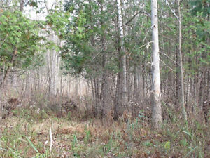GREAT PROPERTY FOR HUNTING & BUILDING YOUR DREAM HOME