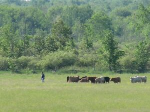 Pasture Wanted