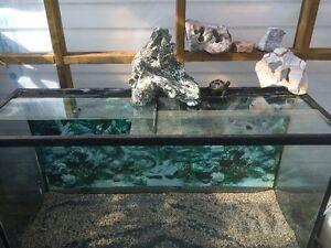 Fish Tank (4 feet)