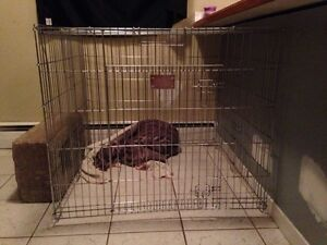 XL dog kennel crate for sale