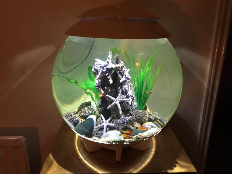 biorb halo 30 litre fish tank accessories white in. Black Bedroom Furniture Sets. Home Design Ideas