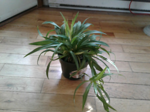 House plants for sale