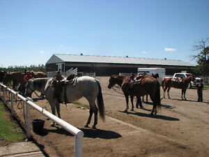 Kids beginner riding lessons Strathcona County Edmonton Area image 1