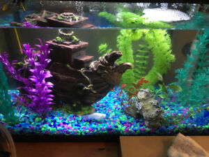 10 gallon fish tank with accessories and supplies