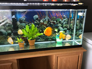 55gal tank with 6x discus
