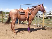 Red Roan Mare