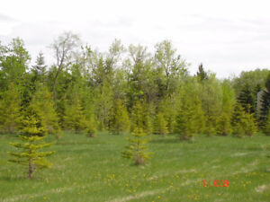 5 ACRE LOT CLOSE TO EAST GATE OF BIRDS HILL PROV. PARK