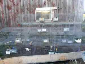 Wire rabbit cages, feeders,accesories Kingston Kingston Area image 5