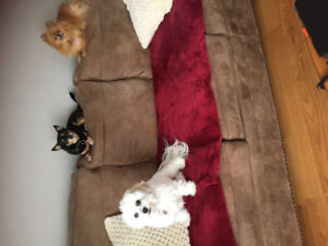 Pet sitting services for smaller dogs