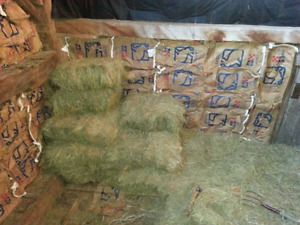 Second cut green dry HAY for sale
