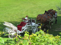 Horse-Drawn Wedding Carriage