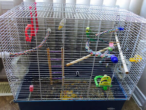 Budgie and big cage // Perruche avec grande cage