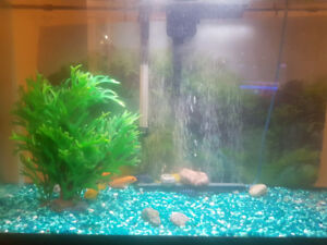 Fish tank (30 gallons) & stand