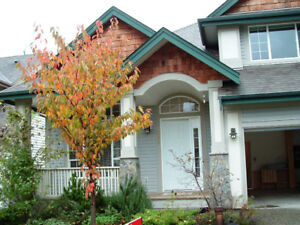 3bdr House for rent in Walnut Grove Langley