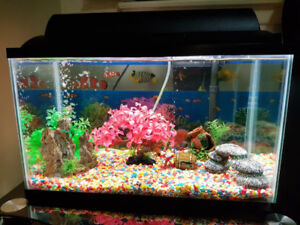 Fish Tank and Fishes for sale!