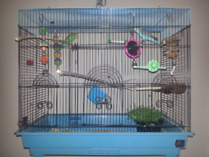Budgies, cage and accessories