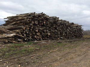 Dry Seasoned Hardwood/ firewood