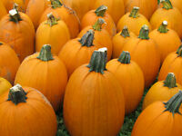 Jack-O-Lanterns/Pumpkins and Gourds