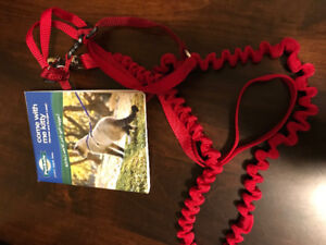 Cat harness and bungee leash
