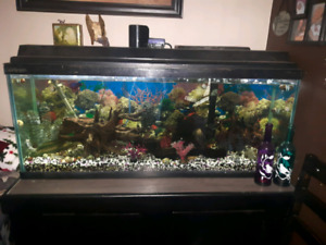 55 gal fish tank with stand