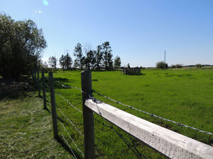 Cutest country charm on 5 acres Strathcona County Edmonton Area image 4