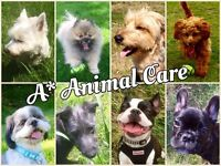 A Star Animal Care - Dog walking and pet sitting.