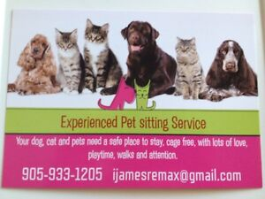 Pet sitter openings now