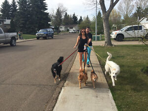 DOG WALKING and VACATION PET SITTING Strathcona County Edmonton Area image 4