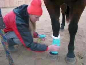 Equine First Aid Course In Clifford Ont Sat Oct 1 Stratford Kitchener Area image 1